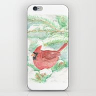 Cardinal And Snowy Pines iPhone & iPod Skin