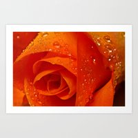 Orange Citrus Rose Art Print