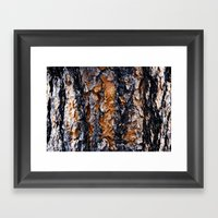 Beautiful Bark Closeup Framed Art Print