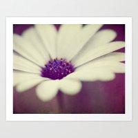 White Daisy II Art Print