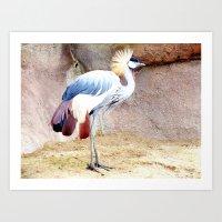 African Crowned Crane at Sunrise Art Print