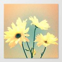 I Dream of Daisy Canvas Print