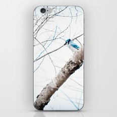 Mr Blue Jay iPhone & iPod Skin