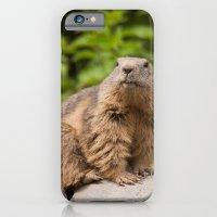 Marmota Marmota iPhone 6 Slim Case