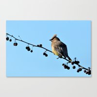 Waxwing On A Winter's Da… Canvas Print