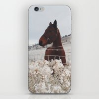 Snowy Horse iPhone & iPod Skin