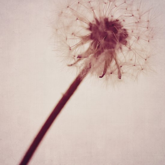 dandelion love Art Print