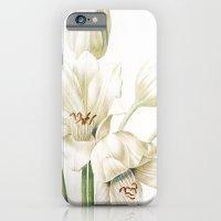 VI. Vintage Flowers Botanical Print by Pierre-Joseph Redouté - Crinum Jagus iPhone 6 Slim Case