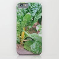 Rainbow Chard iPhone 6 Slim Case