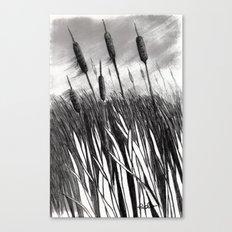Cattail Field Canvas Print