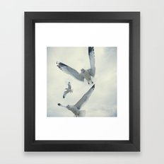 Seagull {Three} Framed Art Print