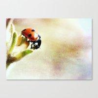 Ladybug Explorer Canvas Print