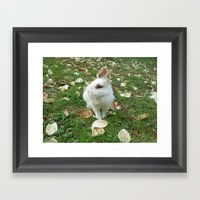 Spring of rabbit Framed Art Print