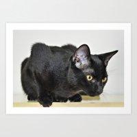Beautiful Black Cat Art Print