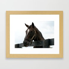Sunshine Forever - Old Friends Equine, Georgetown KY Framed Art Print