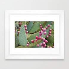 Desert Fruit Framed Art Print
