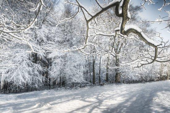 Sycamore Snow Art Print