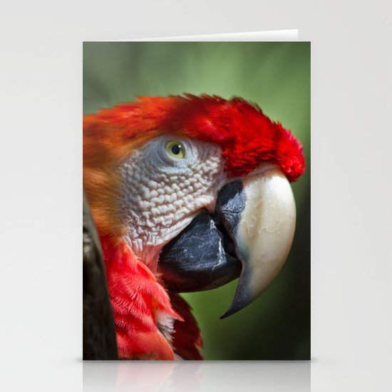 Scarlet Macaw Stationery Card