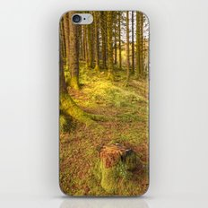 Stump Wood iPhone & iPod Skin