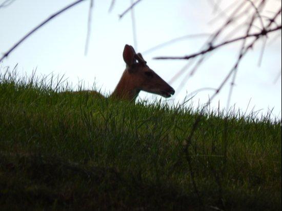 Deer Silhouette Art Print