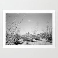 California Ocotillo Art Print