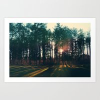 The Trees And The Sun Art Print
