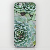 Succulents I iPhone & iPod Skin
