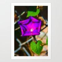 Purple Blossom On A Vine Art Print