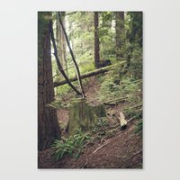 A Walk In The Redwoods Canvas Print
