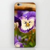 Viola - color iPhone & iPod Skin