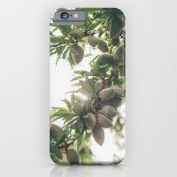 Almond Tree iPhone 6 Slim Case