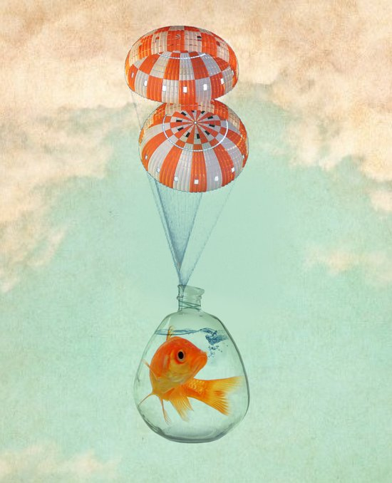 parachute goldfish Canvas Print