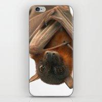 Little Red Flying Fox Ha… iPhone & iPod Skin