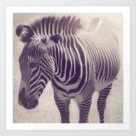 Art Print featuring Zebra Stripes by Jessica Torres Photo…