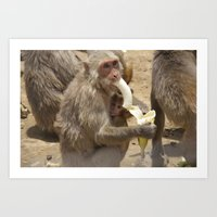 Breakfast For Monkeys  Art Print