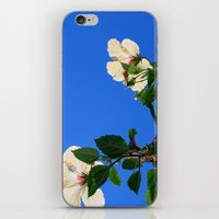 Summer Hibiscus iPhone & iPod Skin