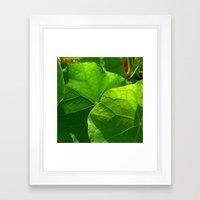 Nasturtium Leaf Framed Art Print