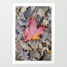Red fallen leaf Art Print