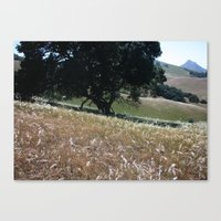 California Live Oak Canvas Print