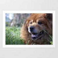 Yogi, The Adorable Chow … Art Print