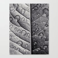 Silver Leaf Canvas Print
