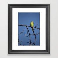 Alexandrine Parakeet Framed Art Print