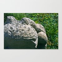 A Frog Named Lucky Canvas Print