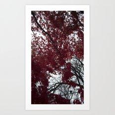 Red Leaves Art Print