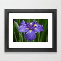 Purple Iris Flower Framed Art Print