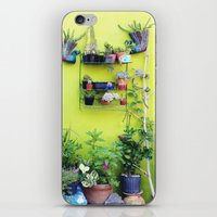 Mexican Yard iPhone & iPod Skin