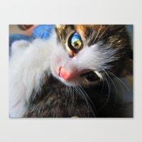 Jewel Eyes Canvas Print