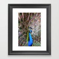 Dunedin Cemetery Peacock Framed Art Print