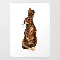 Sitting Rabbit Art Print