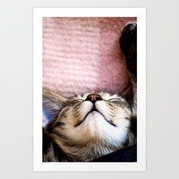 Emily, the cat Art Print